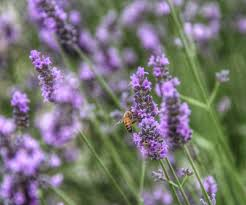plants native to new zealand the best flowers for attracting bees