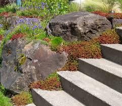 Rock Garden Seattle Seattle Garden Ideas Rockery Plants Part 1 Rock Gardens