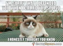 Stupid Cat Meme - grumpy cat sorry for calling you stupid