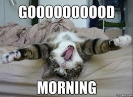 Good Morning Funny Meme - good morning meme 2015 humour spot