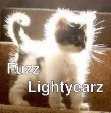 Funniest Cat Memes - cute funny cat memes