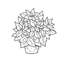 poinsettia coloring pages wonderful poinsettia flower in a pot coloring page download