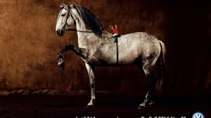 horses stallion andalusian horses background photos hd 16 9 high