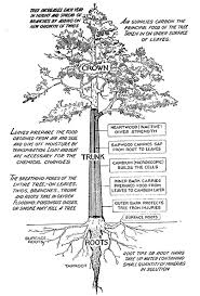 For A Tree Identifying Trees The Norwalk Tree Alliance