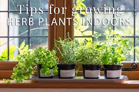Window Sill Herb Garden Designs Indoor Herb Plants Don U0027t Go Grow The Herb Exchange