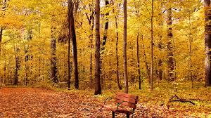 nature autumn parks bench