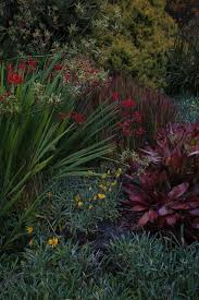 the native plant centre 110 best new zealand native gardens images on pinterest native