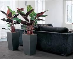 plante verte bureau bureau plante pour le bureau luxury plante pour bureau hubfrdesign