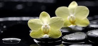 imagenes zen gratis la cultura zen flores velas y demas pinterest flores