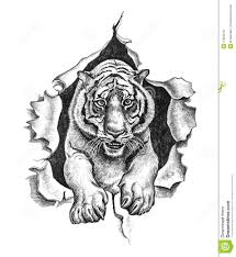 pencil drawing of a tiger stock photos image 27925243