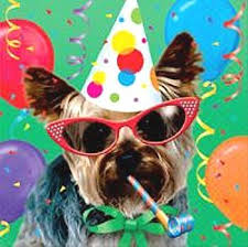 dog birthday party a birthday party for a dog really s turn now the