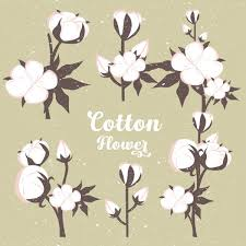 cotton flowers cotton flowers background vintage colored design free vector in