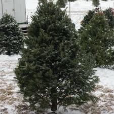 carsonville choose u0026 cut christmas trees home facebook