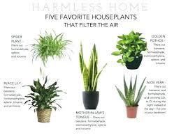 best plant for desk indoor desk plants download by tablet desktop original size back to