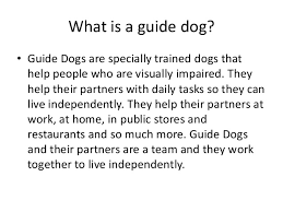 How Does A Guide Dog Help A Blind Person Guide Dogs Powerpoint For Kids