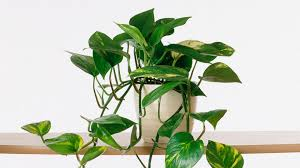 indoor plant growing indoor plants southern living youtube
