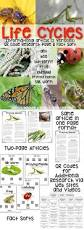 25 best biology lessons ideas on pinterest biology class 11