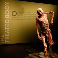 Pictures Of Anatomy Of The Human Body Bodies U2026the Exhibition Premier Exhibitions