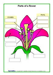 parts of a flower labeled worksheet other plant parts