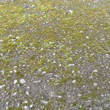 How To Remove Lichen From Patio How Do I Clean Moss From Tarmac