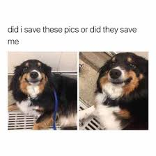 Save Me Meme - did i save these pics or did they save me internet meme meme