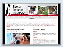boxer dog quebec website design for breeders breederoo com