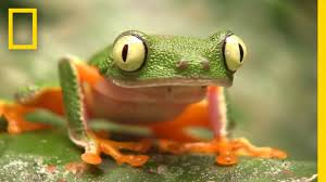 these frogs are in trouble u2014can selling them help national