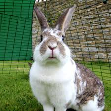 Cool Pets Rabbit Hutch Eglu Go Rabbit Hutch Plastic House And Run For Rabbits