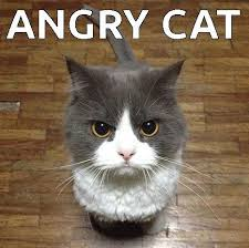 Angry Cat Meme - angry cat meme on imgfave