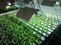 indoor gardening supplies the gardens