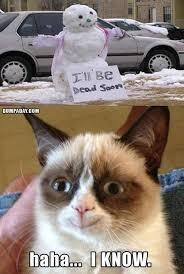 Grumpy Cat Coma Meme - 12 best grumpy cat images on pinterest