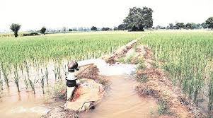 Groundwater Table Saving Paddy Crop Amid Deficient Rain Hits Groundwater Table In