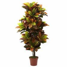indoor tropical plants large scindapsus plants artificial indoor