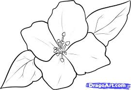 how to draw a jasmine step by step flowers pop culture free