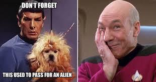 Startrek Meme - boldly go hilarious star trek memes only true fans will understand