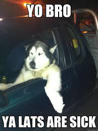 Yo Bro Meme - yo bro ya lats are sick mean dog quickmeme
