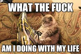 Fuck My Life Memes - mid life crisis cat memes quickmeme