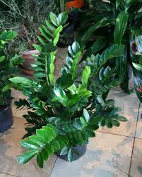 decorations and accessories hard to kill house plants indoor