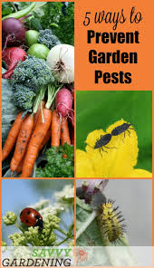 Gardening Pest Control - 184 best organic pest control images on pinterest garden pests