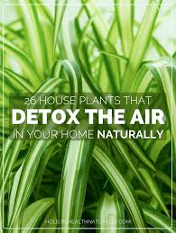 House Plants by 26 House Plants That Detox The Air In Your Home Naturally