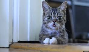 Sad Kitten Meme - little lil bub home footage shows adorable meme cat as a kitten