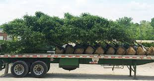 delivery acorn farms wholesale trees shrubs perennials and annuals