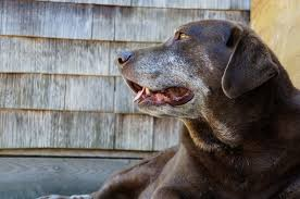 my dog won u0027t sleep at night lovetoknow