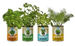 counter culture back to the roots growing kit