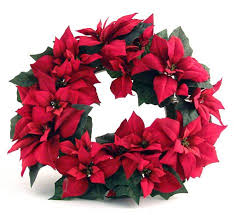 christmas plant uk poinsettias in christmas crisis energy costs and foreign