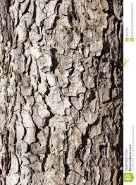 wood tree royalty free stock images image 36042409