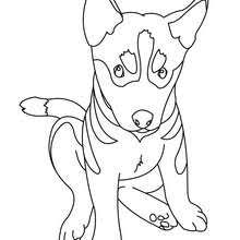 dog and cat with ball coloring pages hellokids com