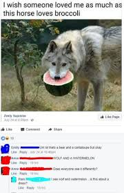 Wolf Memes - wolf and a watermelon oldpeoplefacebook