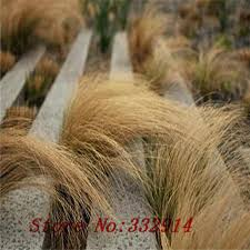compare prices on ornamental grass seeds shopping buy low