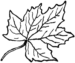 thanksgiving leaves clipart black and white clipartxtras